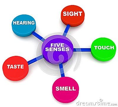 Five human senses
