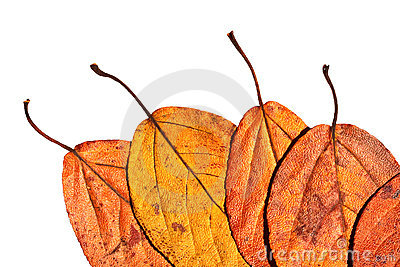 Five leaves painted in bright autumn colours