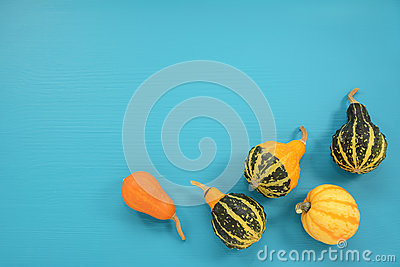 Five ornamental gourds and squash on a turquoise background Stock Photo