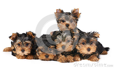 Five puppies