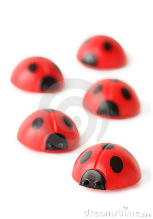 Free Five Red Small Ladybugs Are Crawling Isolated Stock Photography - 20570842