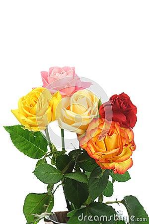 Five roses.