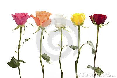 Five roses in different colors