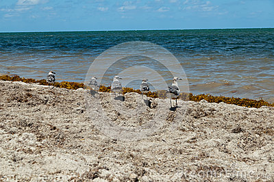 Five Seagulls at the beach