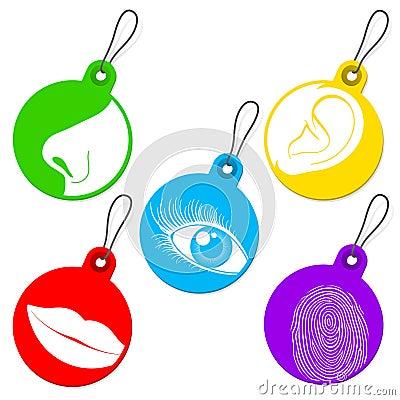 Five senses tag set