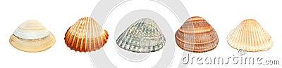Five shells.