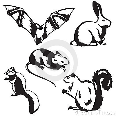 Five small mammals