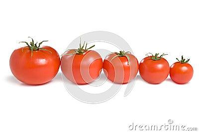 Five tomatoes-1