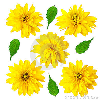 Five yellow color flowers with green leafs
