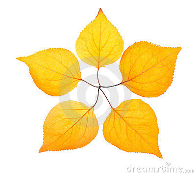 Five yellow leaf placed like a pentactinal star