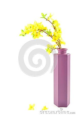 Forsythia i purpurfärgad vase