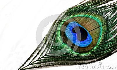 Fjäderpåfågel