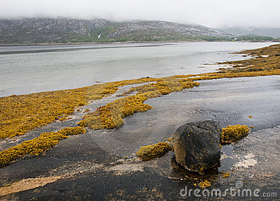 Fjord rocky shore with seaweed
