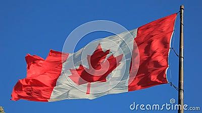 flaga kanady krajowe zbiory wideo