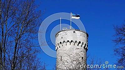 Flagga av Estland som vinkar på det högväxta historiska tornet som göras av massiva tegelstenar i Tallinn, Estland stock video