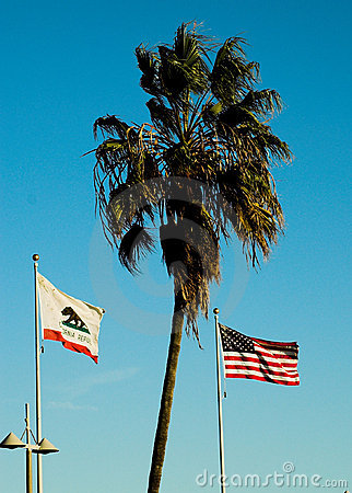 Flags and palm