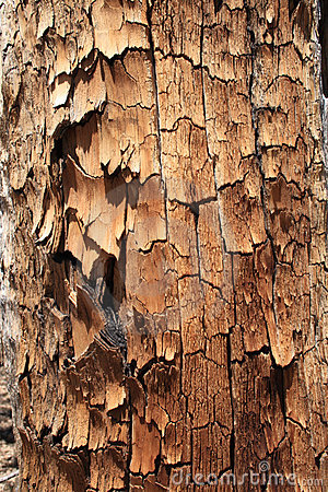 Flaking tree trunk