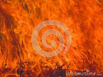 Flame burning grass