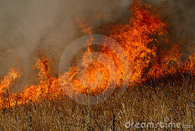 Flames and grass