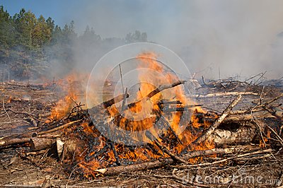 Flames and smoke from a prescribed fire burn