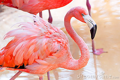 Flaminga parka menchii przyroda