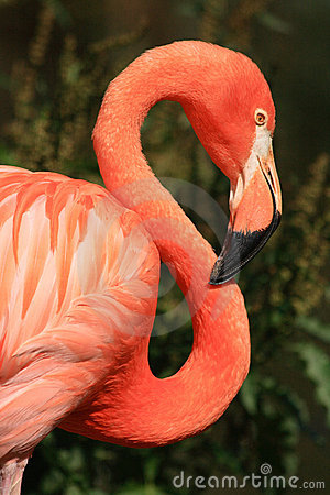Free Flamingo Stock Photography - 10390532