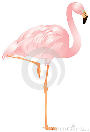 Flamingo in