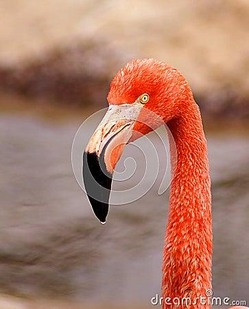 Free Flamingo Stock Image - 2700881