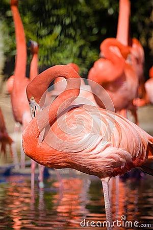 Free Flamingo Royalty Free Stock Photo - 48082905