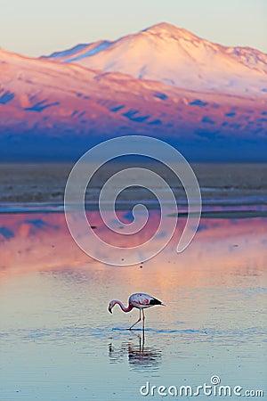 Free Flamingo Royalty Free Stock Image - 50298476