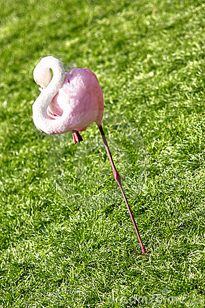 Free Flamingo Stock Image - 6533071