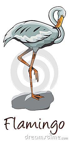 Flamingo, Color Illustration