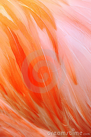 Free Flamingo Fathers Royalty Free Stock Image - 19372126