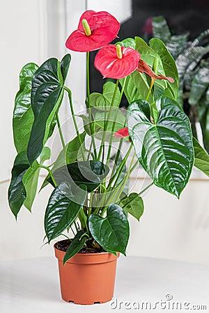 Free Flamingo Flower Stock Photos - 49701013