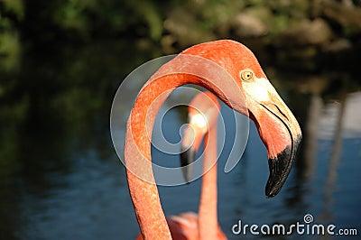 Flamingo head