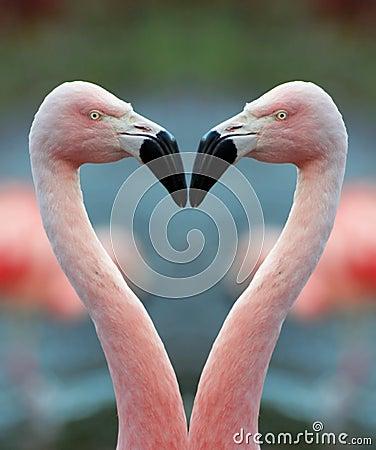Free Flamingo Heart Stock Photography - 1706822