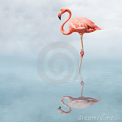 Free Flamingo In Pond Royalty Free Stock Photography - 1143547
