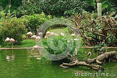Flamingo in Kowloon park