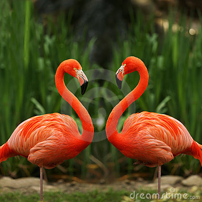 Flamingo love talk