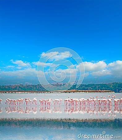 Free Flamingo Reflection Stock Photography - 41389632