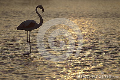 Flamingo standing in lake in France