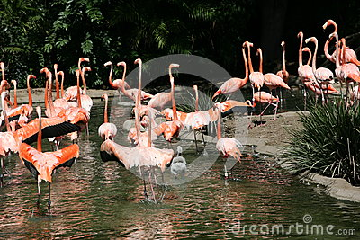 flamingo in usa