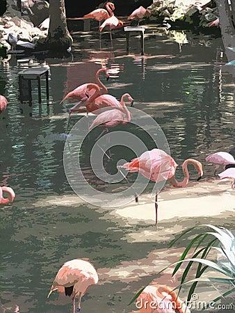 Flamingo Watercolors