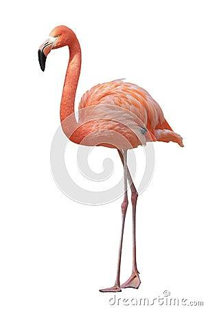 flamingo stock photo image 47300546