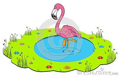Flamingo in the wildlife