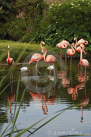 Free Flamingos Stock Images - 927184