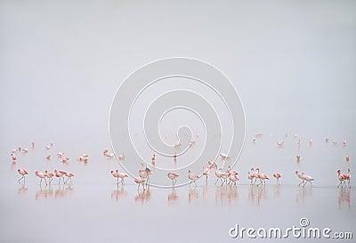 Flamingos im Nebel in Laguna Colorada, Bolivien