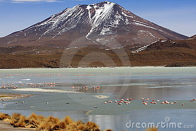 Flamingos on lake, Bolivia