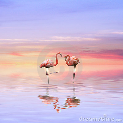 Free Flamingos Love Stock Images - 8425324