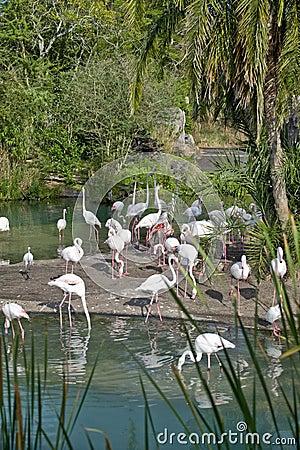 Flamingos in Orlando, Florida